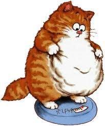 http://resize.over-blog.com/400x260-ct.jpg?http://idata.over-blog.com/5/03/29/20/cache/alimentation/obese/imagesr.jpg