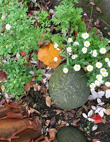 flowerrock