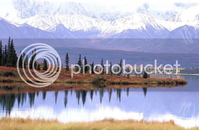Landscape of Denali National Park