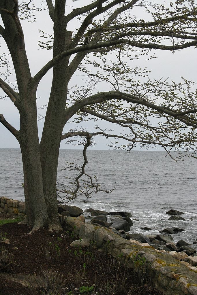 http://upload.wikimedia.org/wikipedia/commons/thumb/6/60/View_from_Shore_Road%2C_Magnolia_MA.jpg/683px-View_from_Shore_Road%2C_Magnolia_MA.jpg