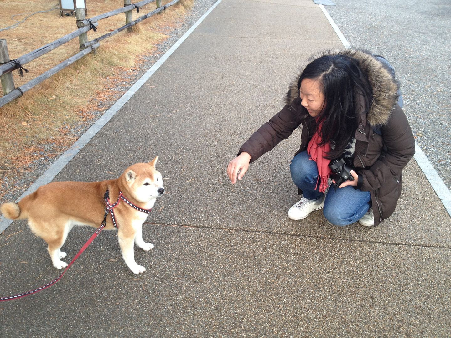 Claire loving on an old shiba inu photo 2013-12-20151544_zps5a25b950.jpg