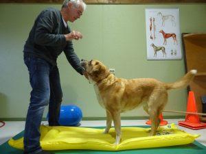 exercício coluna do cão