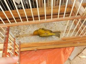 Pássaro estava debilitado e morreu, segundo a PM (Foto: Polícia Militar/Divulgação)