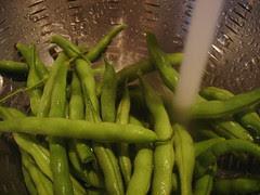 green beans fresh out of the garden