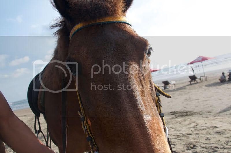 horse,beach,horse riding,animals
