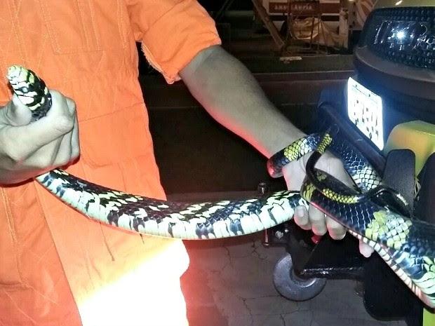 Cobra apareceu em esteira em aeroporto de Rio Branco (Foto: Cedida Assessoria Senador Gladson Cameli)