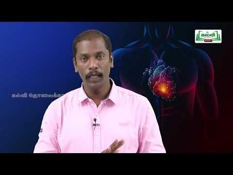 வகுப்பு 10 அறிவியல் அலகு 14 மனித இதயம் Kalvi TV