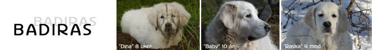 Våre hunder