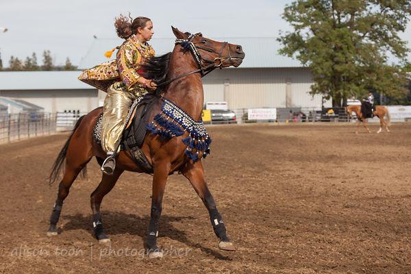 Spirited Arabian horse
