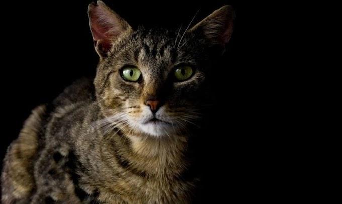 Todo sobre la eutanasia en los gatos