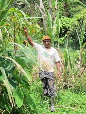 Zé da cana planta diversas culturas, de batata doce, mandioca e banana à hortaliças e cana-de-açúcar (Foto: Gabriela Gasparin/G1)