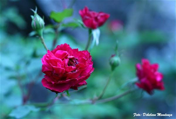 flor - Dihelson Mendonca