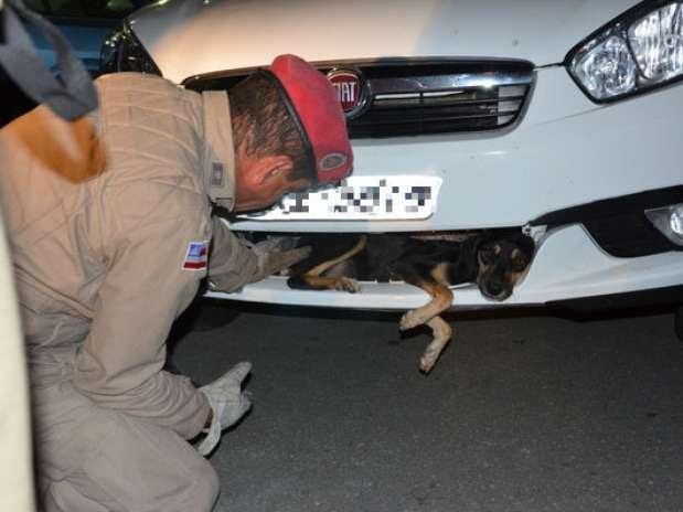 Homens do Corpo de Bombeiros ajudaram a resgatar cadela presa em parachoque de carro em Vitória da Conquista, no sudoeste baiano Foto: Anderson Oliveira / vc repórter