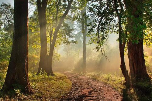 Morning in a jungle.. por srini_g2003