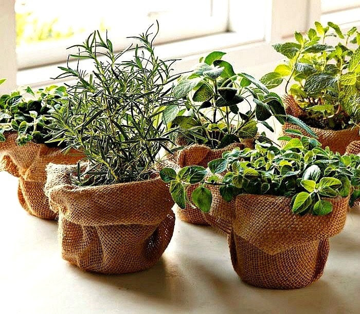 Windowsill Herb Garden Collection seven spices, 1300 seeds, easy indoors, great hostess gift