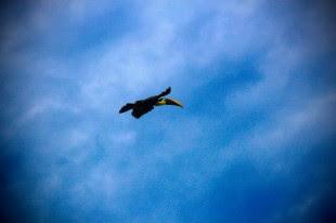 La foto del día en pleno vuelo