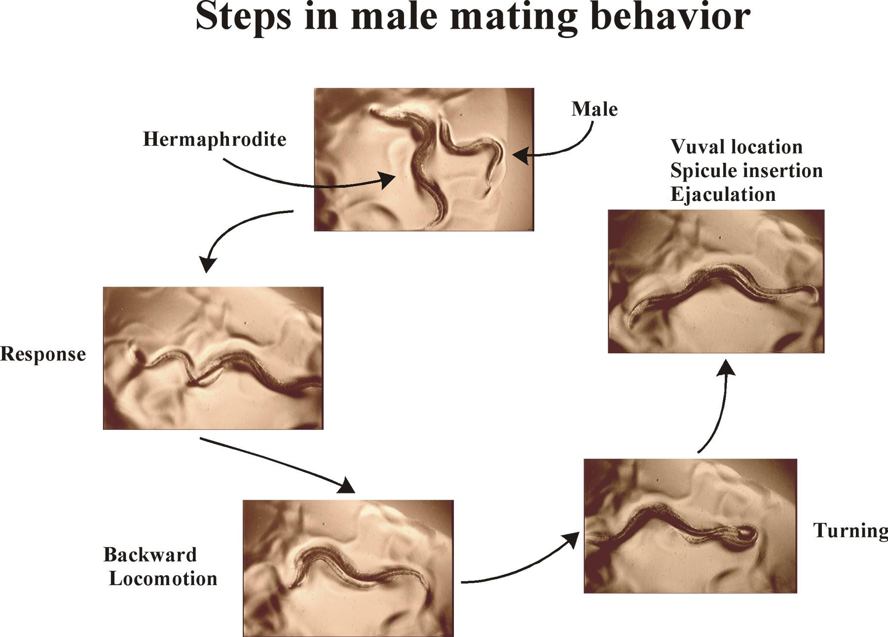 ejaculating men