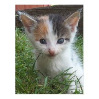 Farm Kitten Postcards