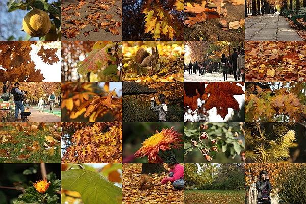 [autumn tones]