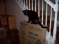I Can Has Boxes?