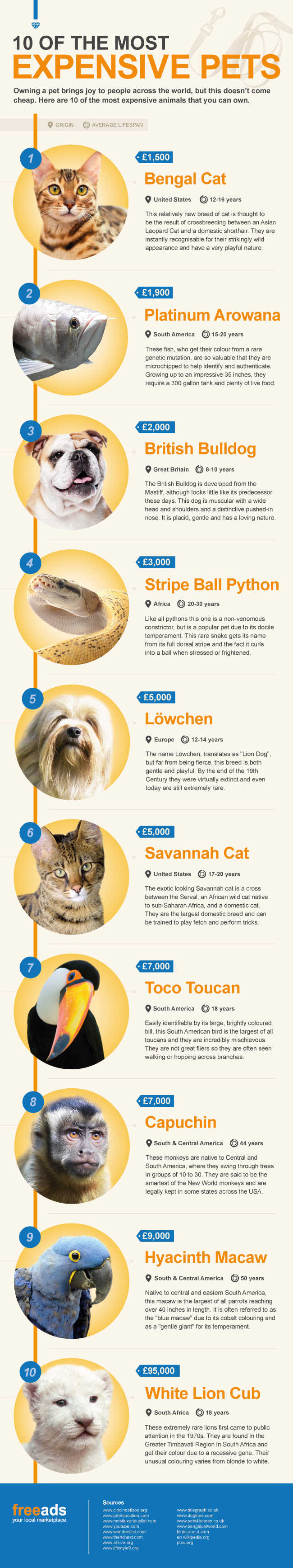 10 of the most expensive pets