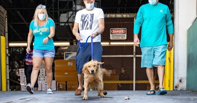 20 Golden Retrievers Saved From Chinese Meat Market Arrive In Miami