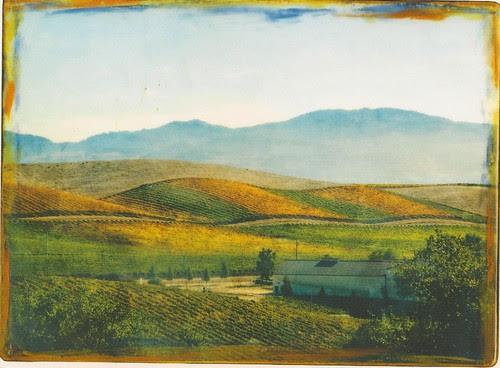 Artesia Vineyard, and Winery, Napa County