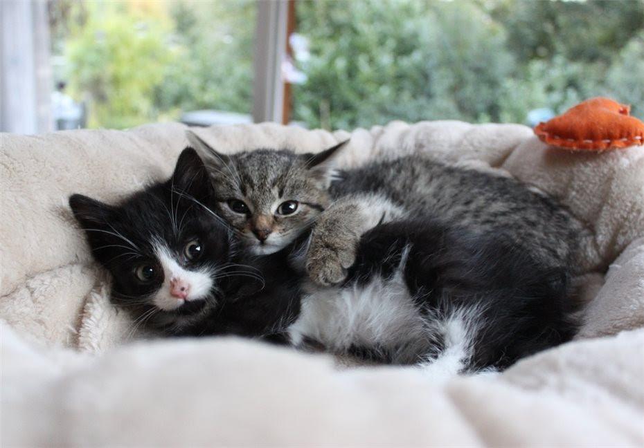 Kleine Katzenbabys im Wald ausgesetzt
