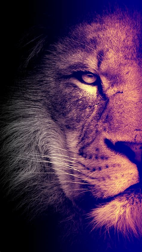 cool lion wallpapers  iphone