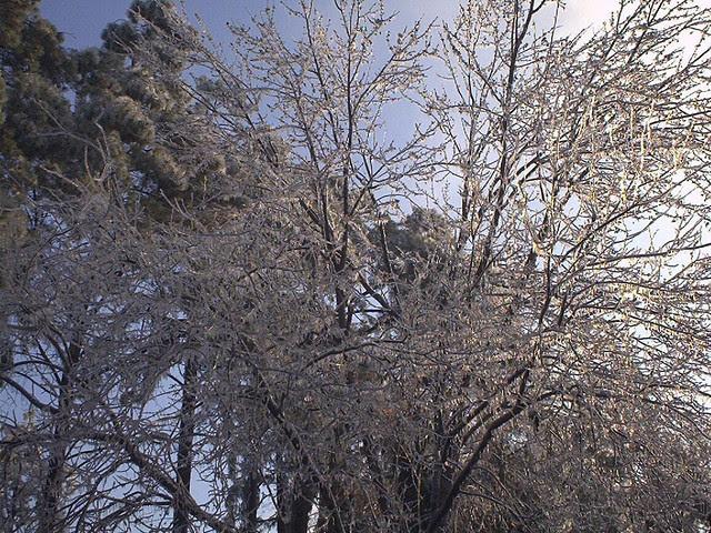 abcwed icestorm 2002