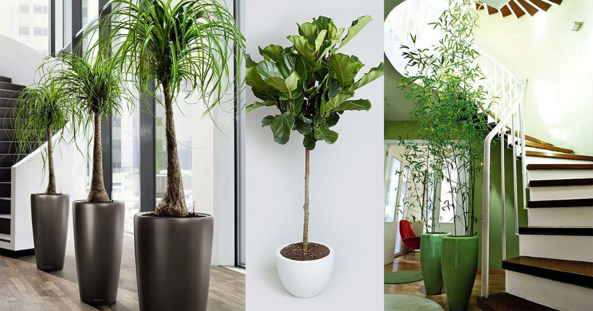 18 Best Large Indoor Plants for Home Offices5
