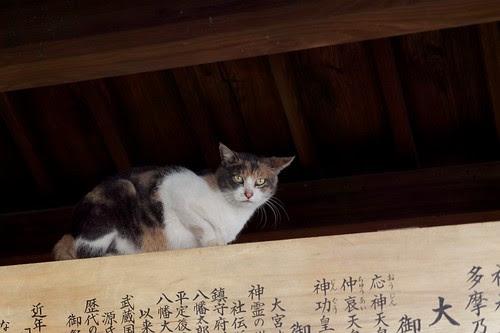 大宮八幡宮で猫発見