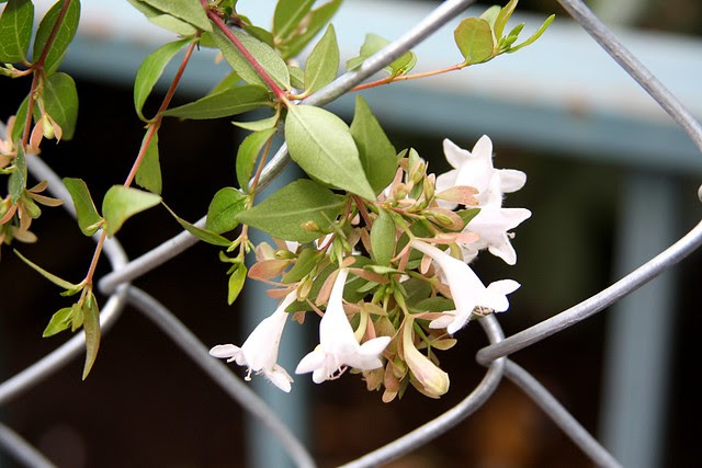 fences & flowers
