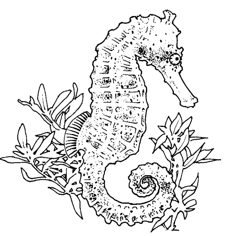 Adult Coloring Pages Seahorse Download Coloring For Kids 2018