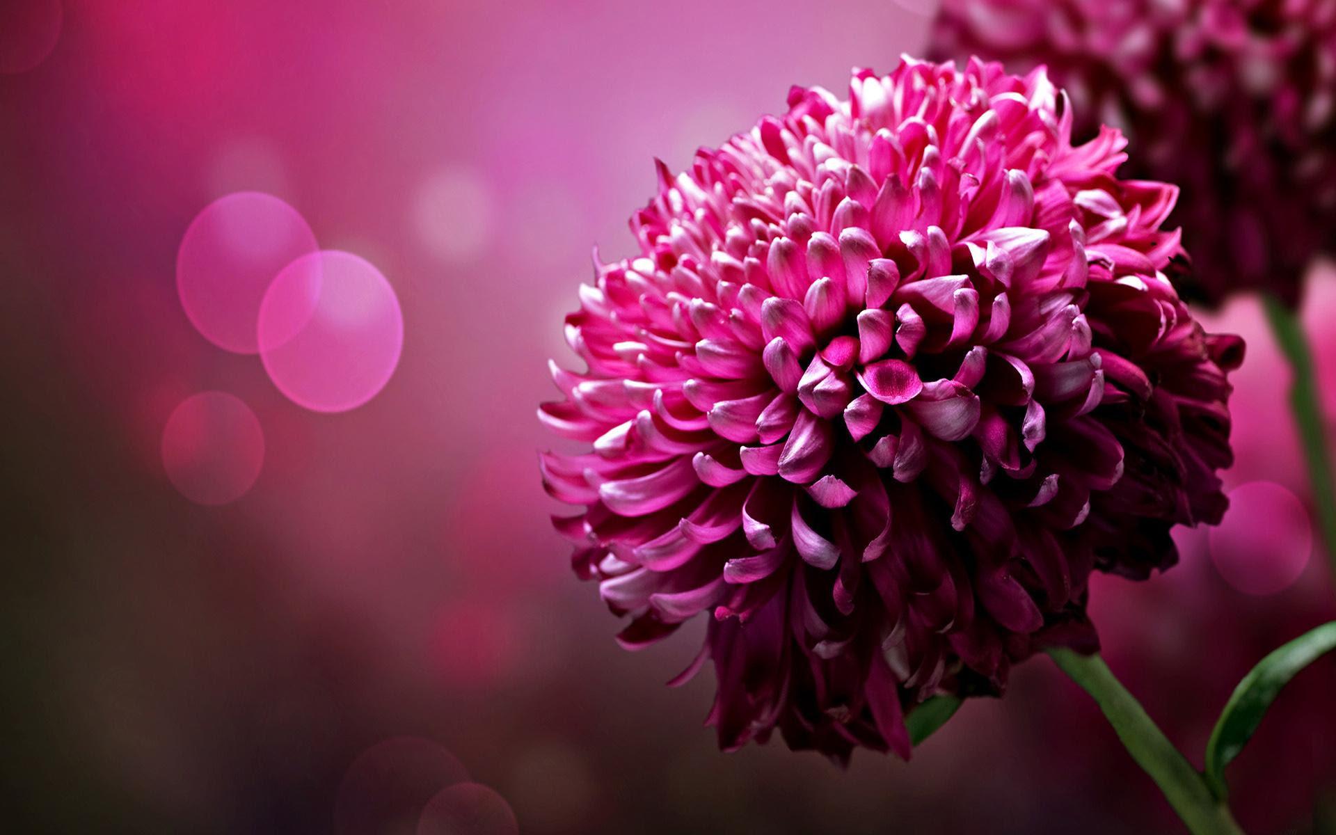 Flowers Wallpapers Desktop Sf Wallpaper