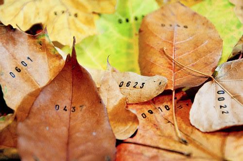 numbered leaves, stamped leaves