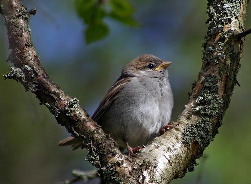 Juvenile Bird