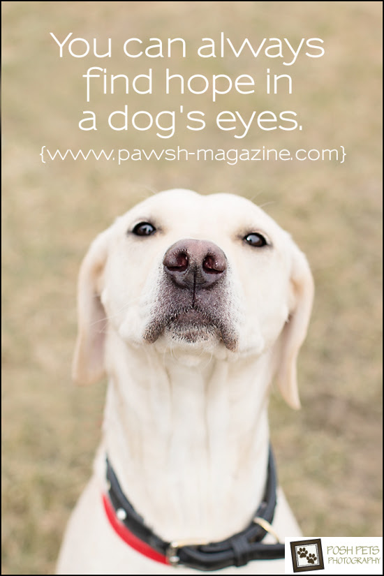 Quotes A Dog Would Say. QuotesGram