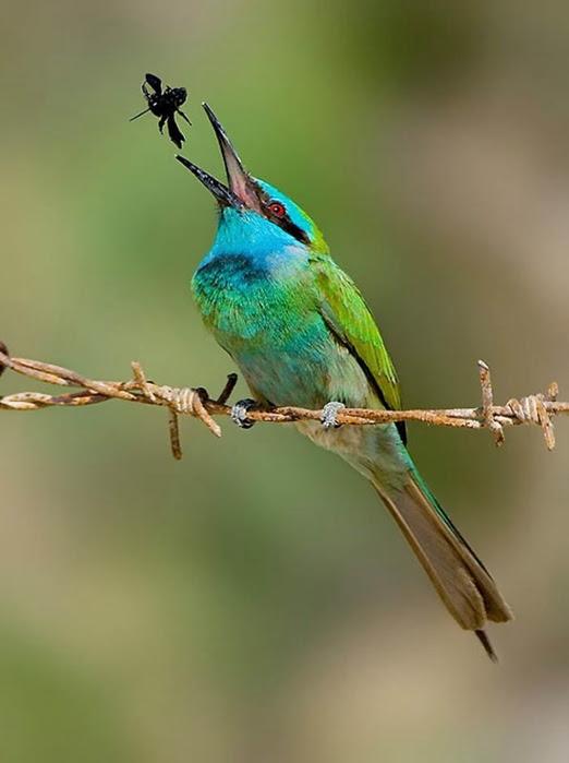 Bird_33 (522x700, 134Kb)
