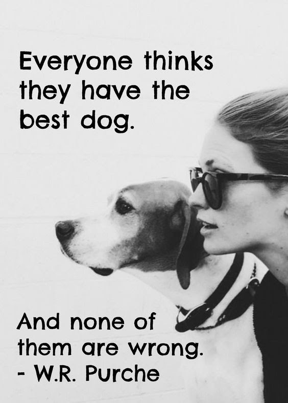 18 Heartwarming Dog Quotes About Life and Love  FallinPets
