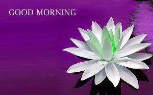 Sunday Good Morning Wallpaper In HD