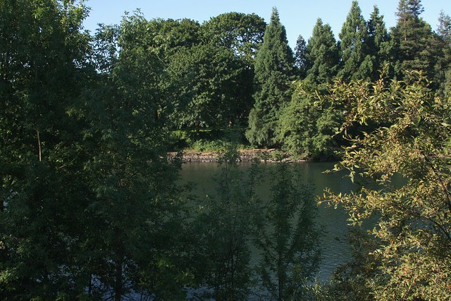 Willamette River near Washington-Jefferson St. Bridge
