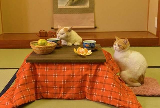 Kucing Pemandu Wisata