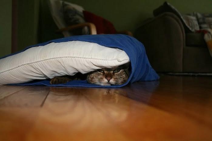 hidingcats14 (700x467, 131Kb)