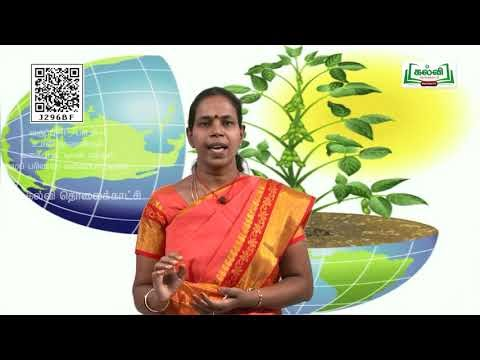 11th  Biological Botany வகைப்பாட்டியல் மற்றும் குழுமப்பரிணாம வகைப்பாட்டியல் அலகு 2  பாடம் 5  பகுதி 3  Kalvi TV
