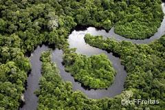 Floresta Amazônica, até quando? / Amazonian Forest, until when? / Amazona Arbaro, ĝis kiam?
