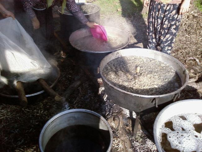 Name:  Kaynayan su salan pancarlar cuvallara süzülmesi için dolduruluyor.jpg Views: 3655 Size:  60.1 KB