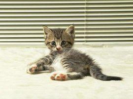 Papel de parede 'Gato #3'