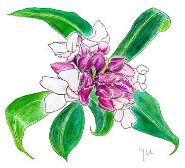 月刊お好み書き2011年3月号仁さんのよもやま花誌22