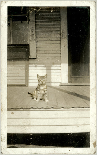 Kitten on the porch